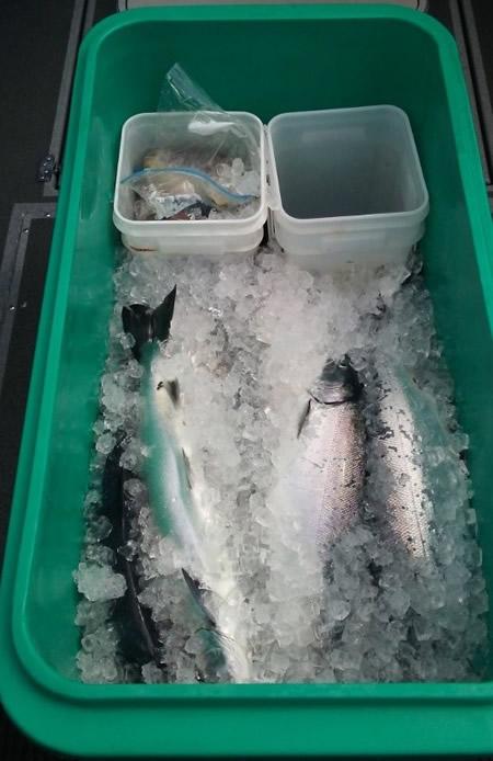 fish_processing